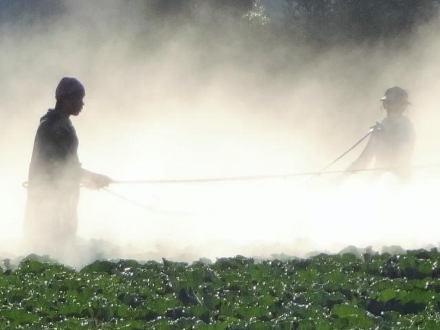 3分でわかる技術の超キホン 生物農薬とは