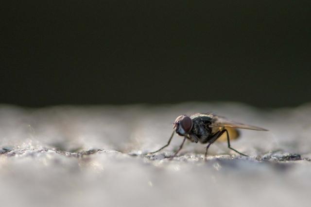 3分でわかる技術の超キホン 昆虫成長制御剤(IGR: Insect Growth Regulator)とは