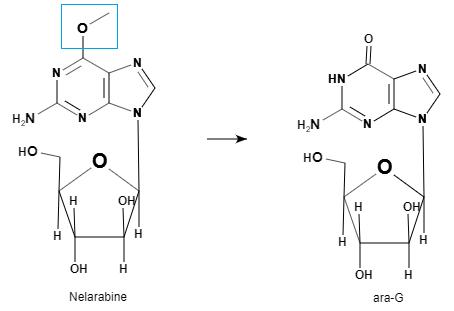 Nelarabine and ara-G