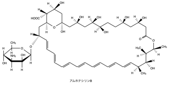 アムホテリシンB