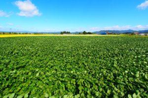 農作物とプラントアクチベーター