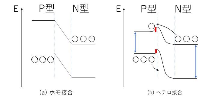 ホモ接合とヘテロ接合