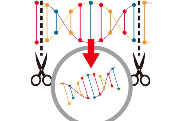 ゲノム編集技術の基礎知識を解説
