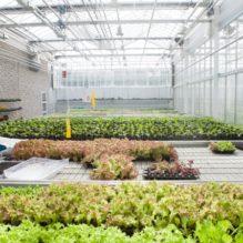 植物工場における自家中毒(アレロパシー)・連作障害とその制御 ~植物工場など今後の農業の効率化/高収益化を目指して~ 【提携セミナー】