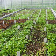 植物工場ビジネスの現状と採算性を踏まえた戦略指針《近年の実状およびスマート農業・AI化の展望・可能性》【提携セミナー】