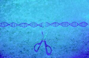 ゲノム編集の改良