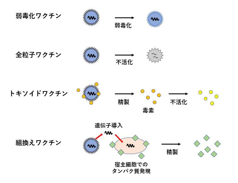 従来型ワクチンの製造法