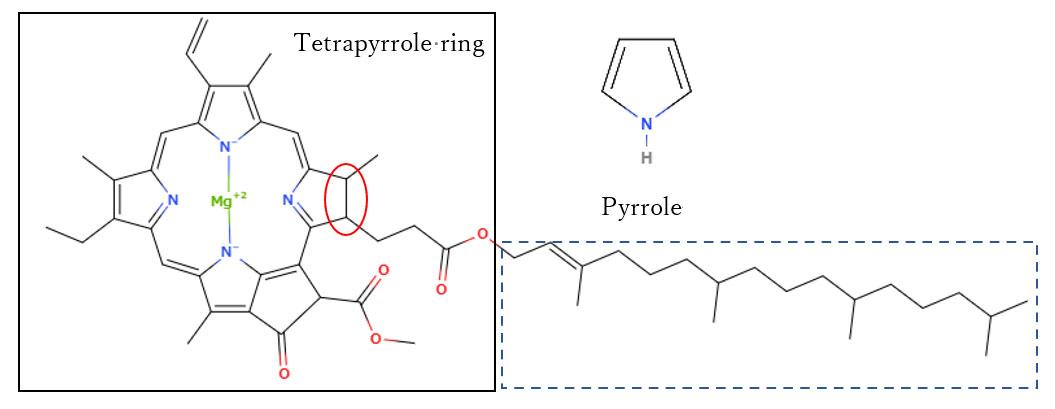 クロロフィルαの分子構造