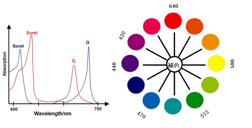 クロロフィルa(青)とクロロフィルb(赤)の吸収スペクトル及びカラーサークルと波長/nm