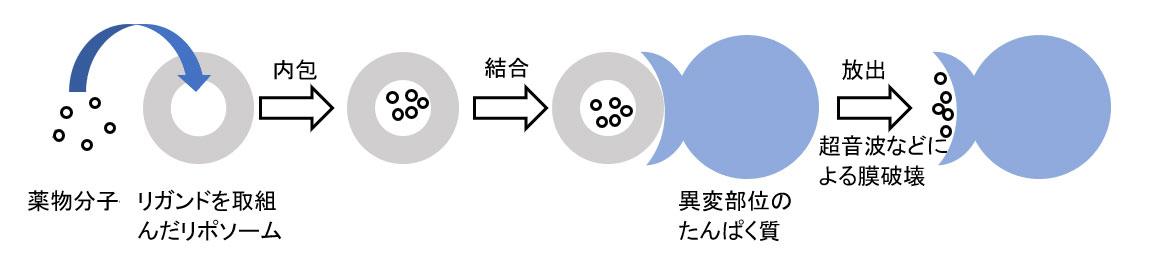 標的薬物送達システムの概念図