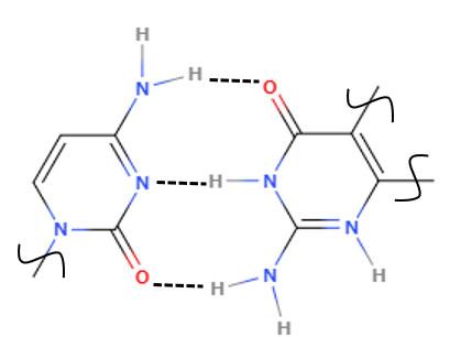 分子間水素結合による自己組織化
