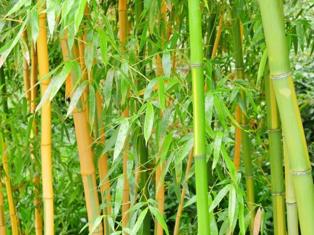 植物繊維 竹